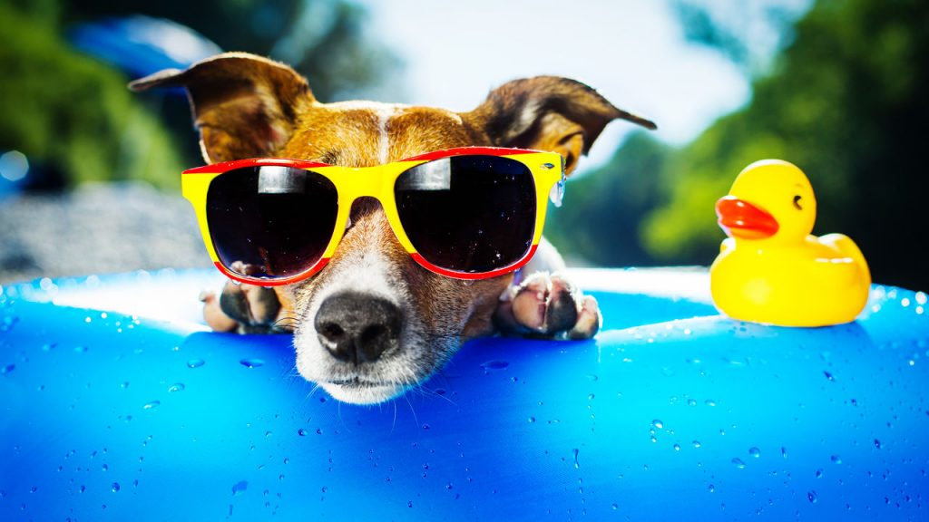 3037396-poster-p-1-the-best-vacation-homes-for-dogs pague suas férias